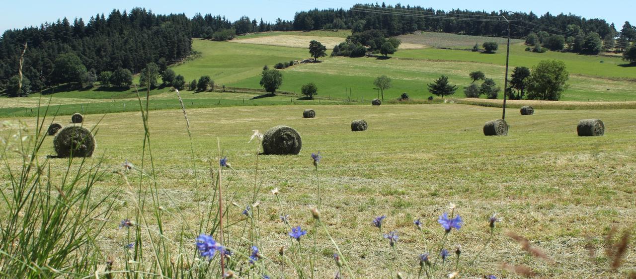 Projet agricole d partemental chambre d 39 agriculture de la loire - Chambre d agriculture du rhone ...